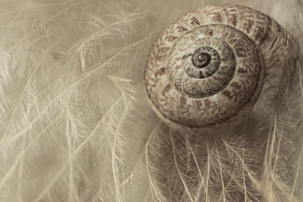 Snail`s Shell-4
