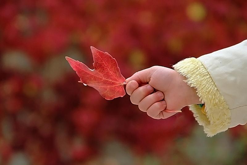 """""""This is my favorite leaf..."""""""