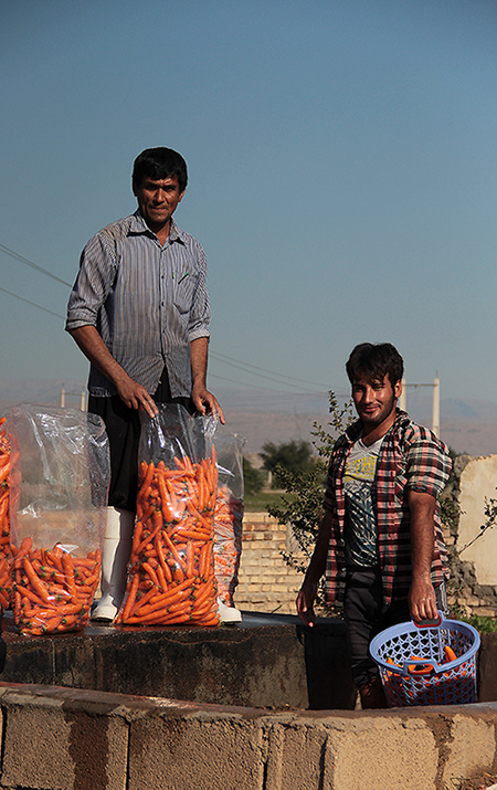 The Mans Who Are Washing Carrot