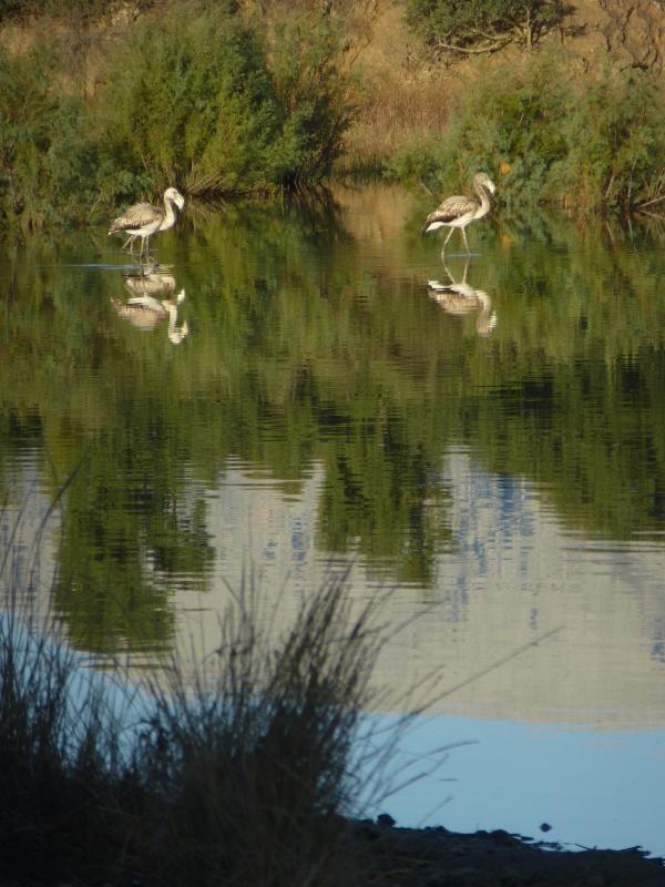 Peaceful Sardinian birds