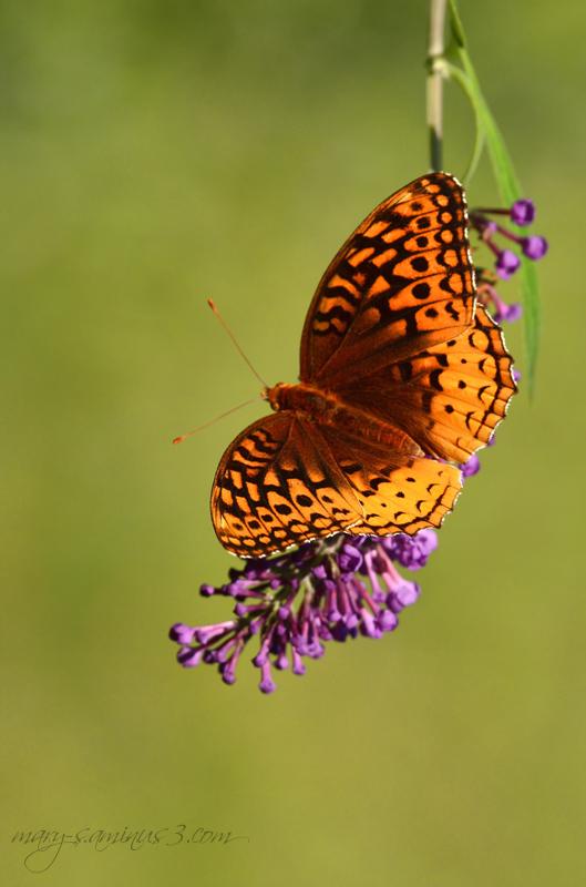 Butterflies~4