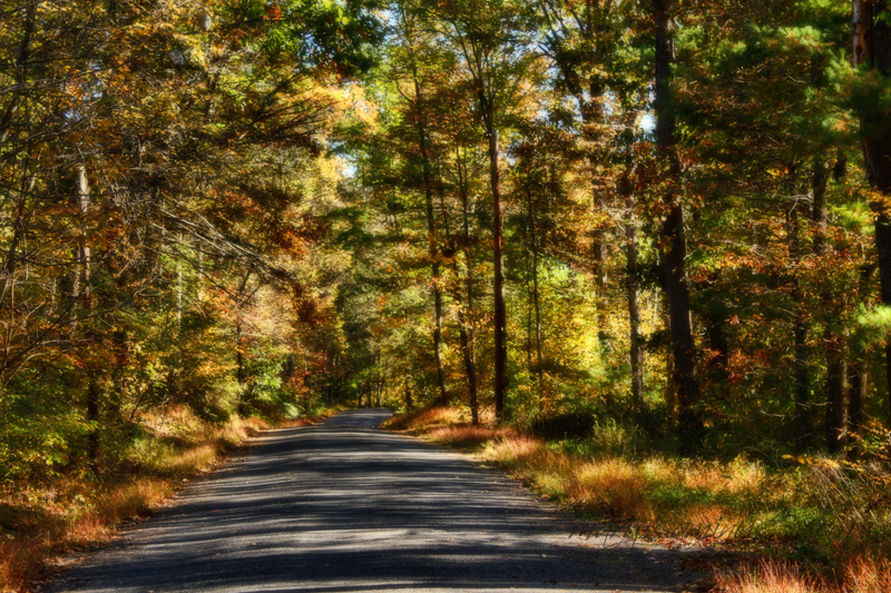 Scenes of Autumn~3