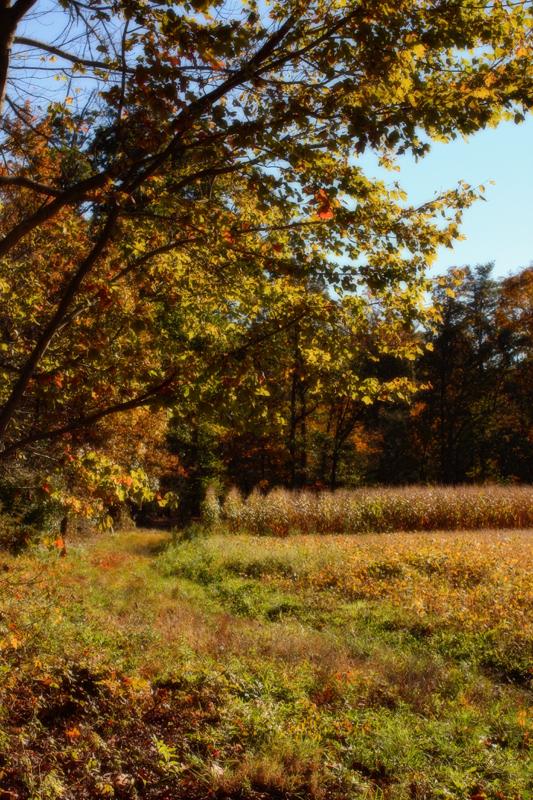 Scenes of Autumn~5