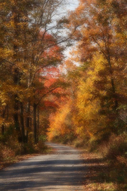 Scenes of Autumn~7