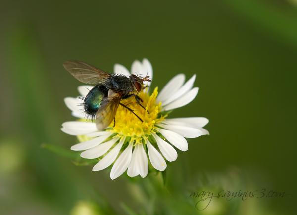 Enjoying a flower