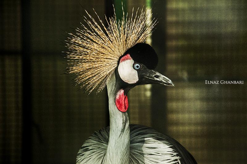 Persian bird