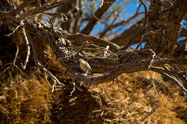 ocell col·laborador namibia africa