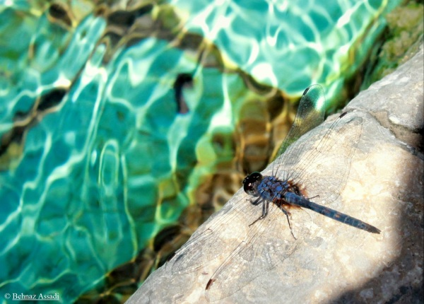 dragonfly on the shore