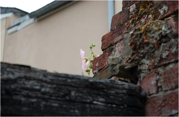 cancale dekert fleur evasion