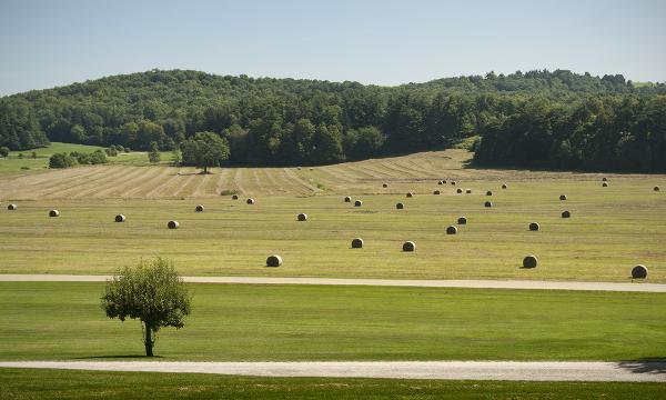 Hay field in Shelburne, Vermont