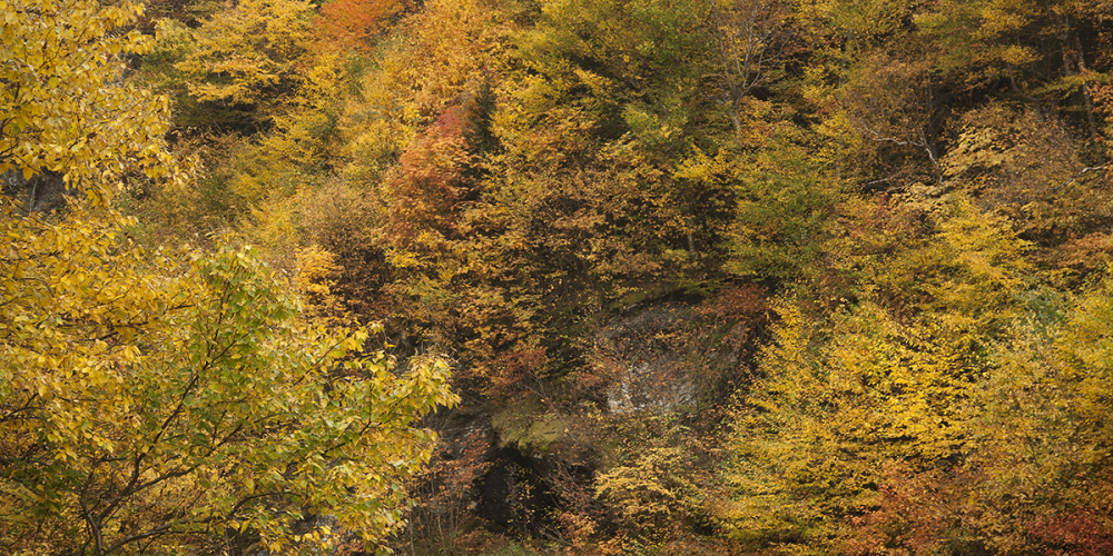 Fall foliage in Vemront