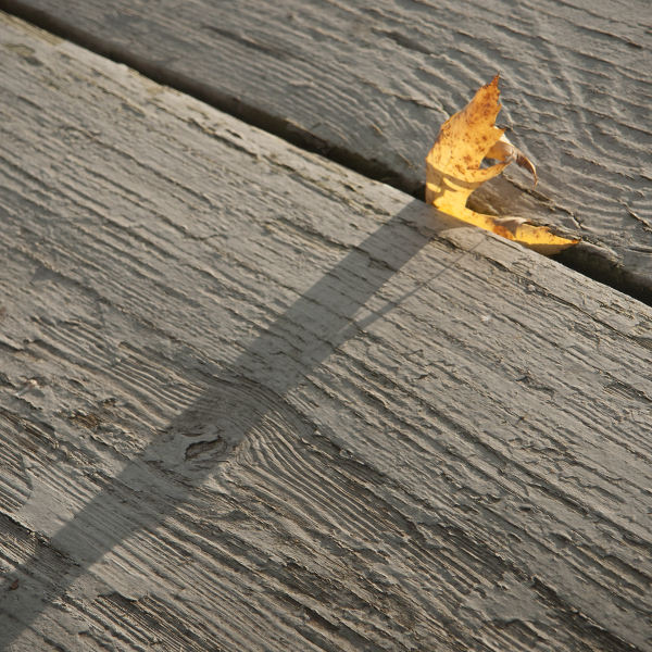 A leaf in Vemront
