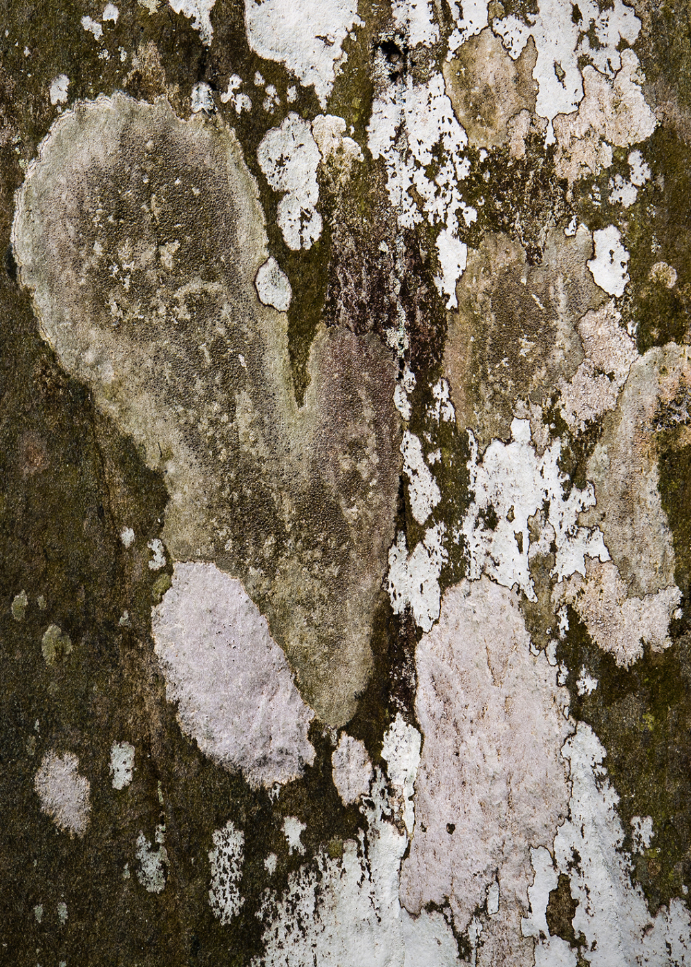 Lichens on a rock face.