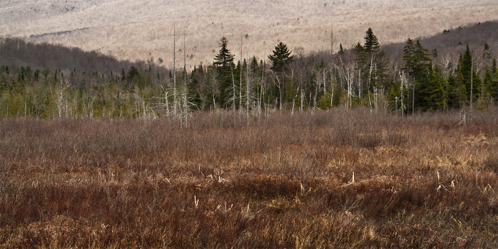 Spring on a Vermont marsh.