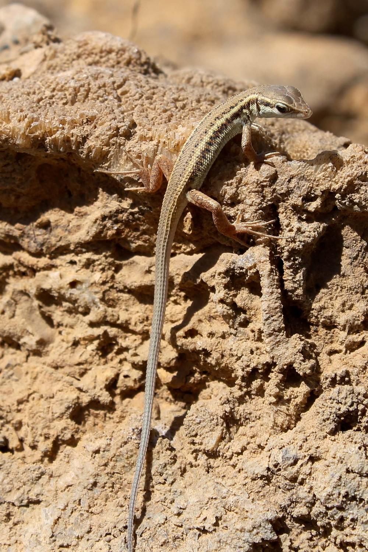 cute lizard
