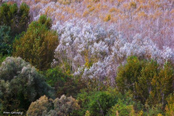Wild Tuscany