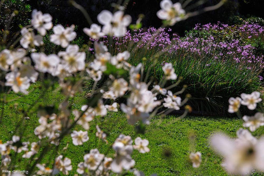 Flowers in La Foce Garden, Tuscany
