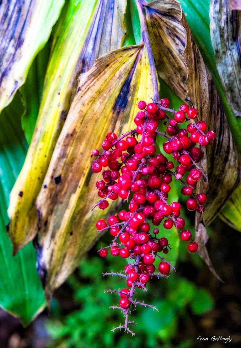 Autumn's Colors