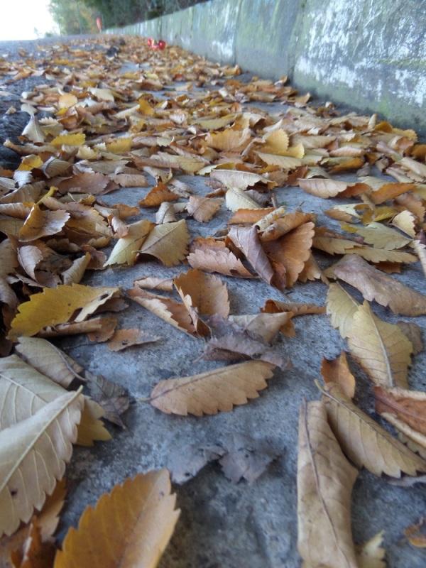 برگهای زرد پاییز