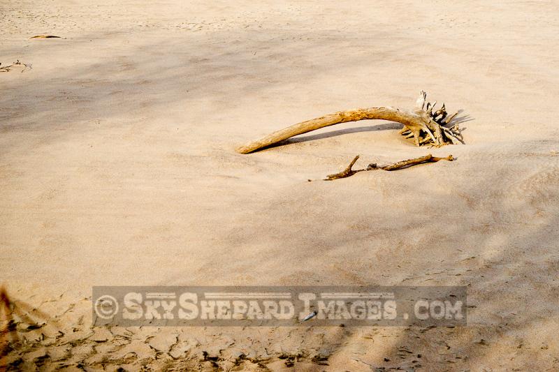 Driftwood on a Des Moines River Sandbar