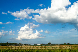 Cloudy Iowa Sky over Cornfield in July