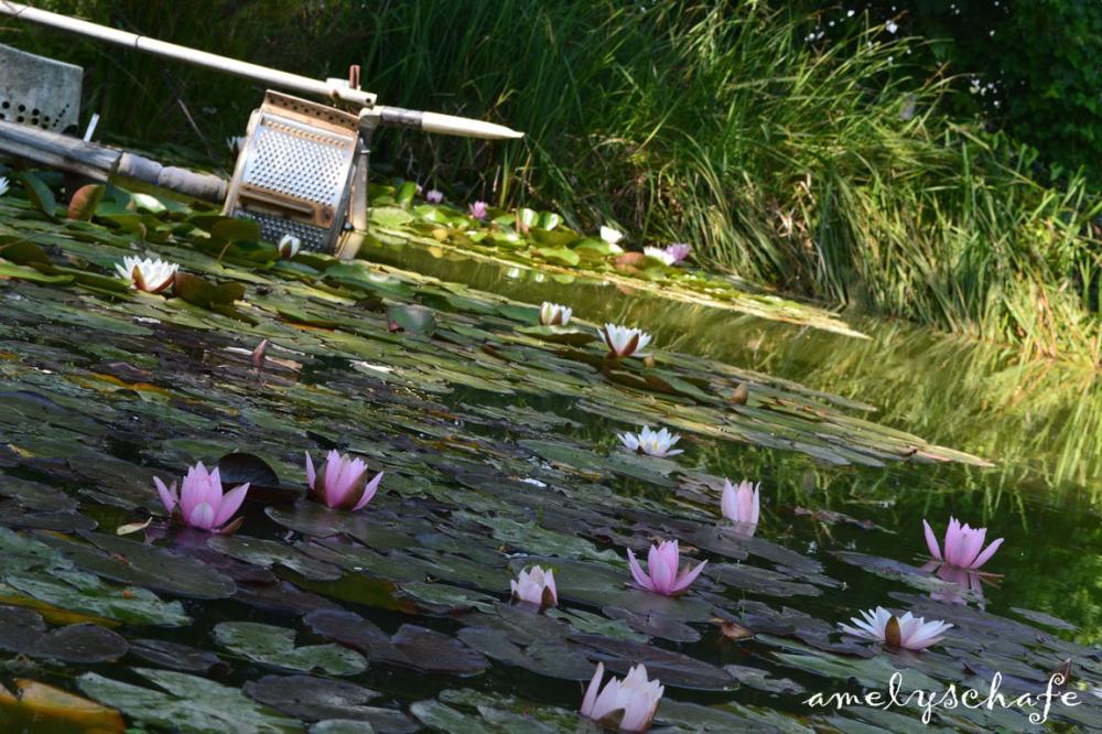 Pond full of fish :)