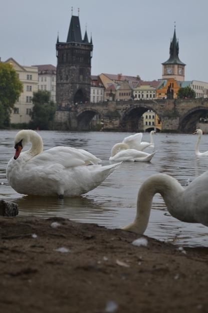 One grey day in Prague