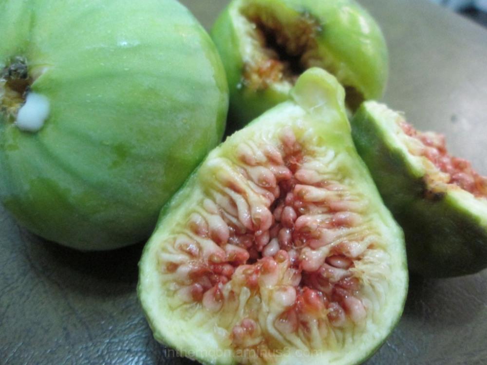 آخرین انجیرهای حیاط...Last figs of our yard