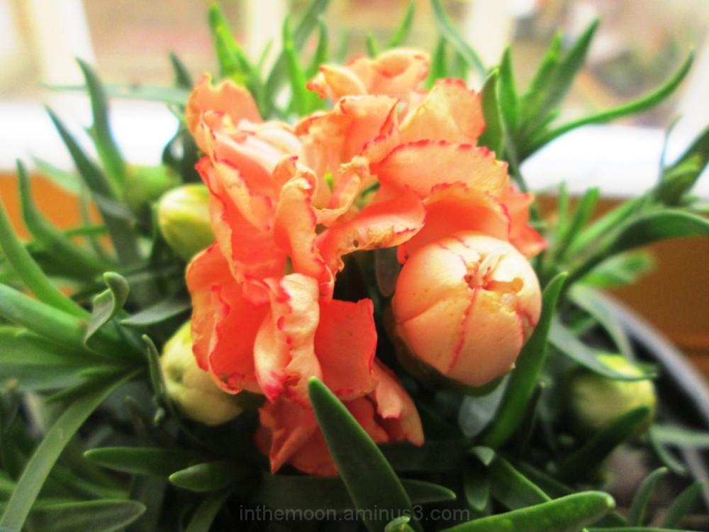 my flower3