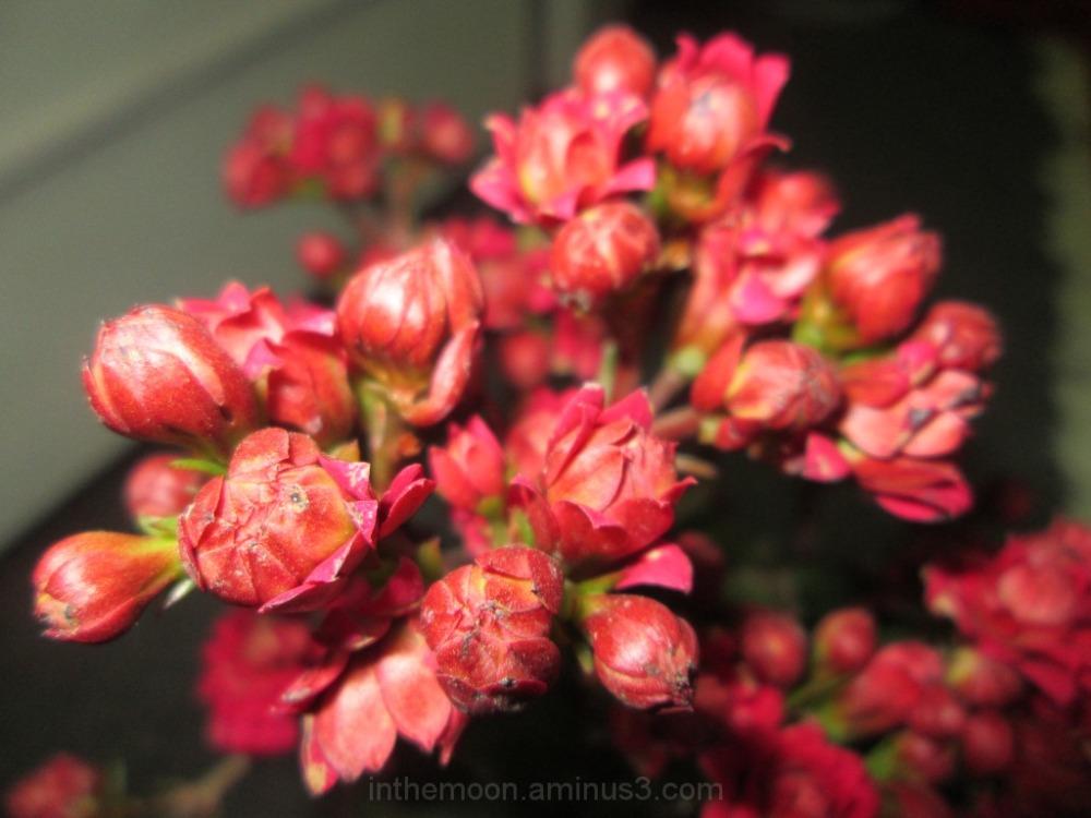 my flower5