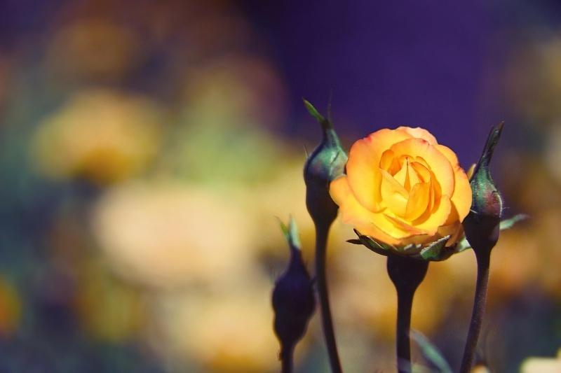 Kind flower !