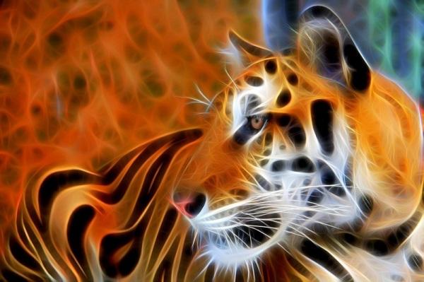 Tiger !