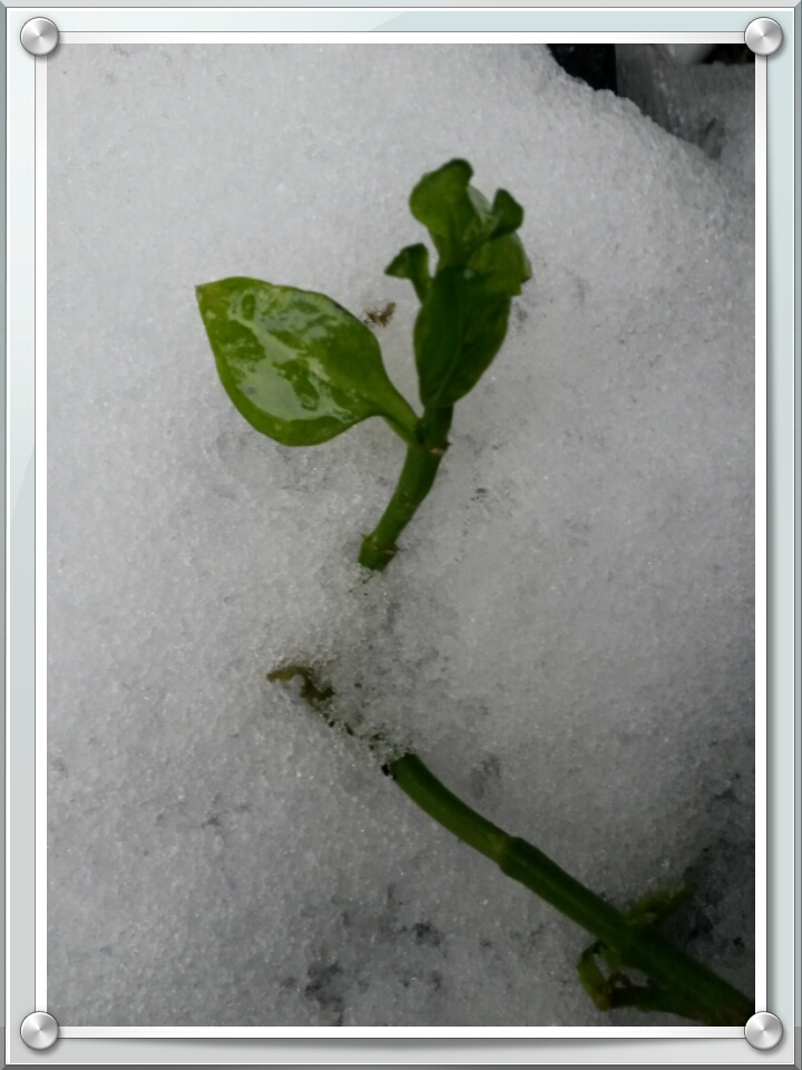 Snow & Flower