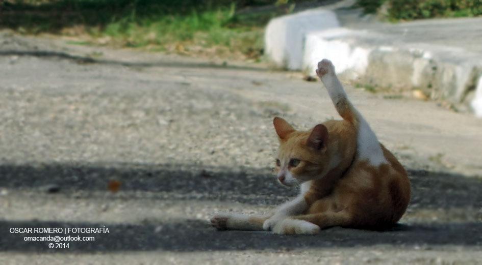 Gato callejero en el vecindario