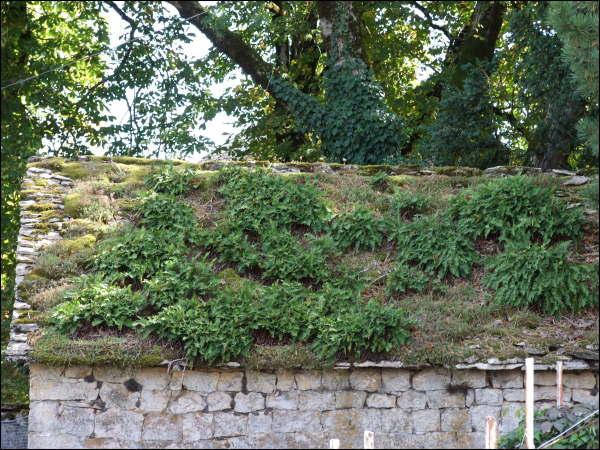 Un toit de verdure