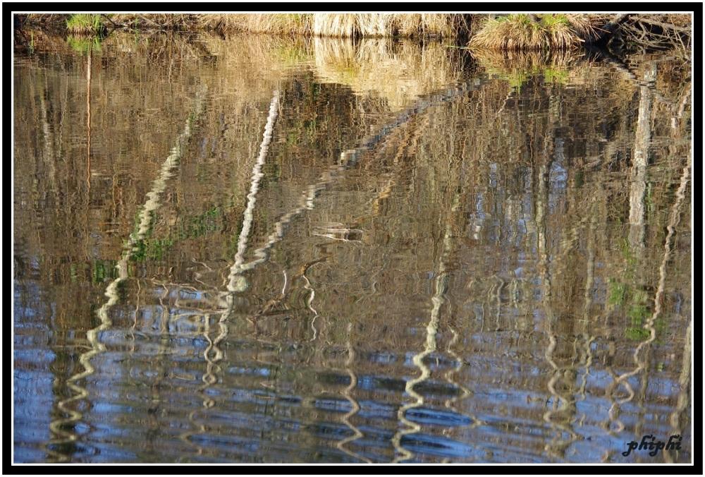 le doux reflet des bouleaux