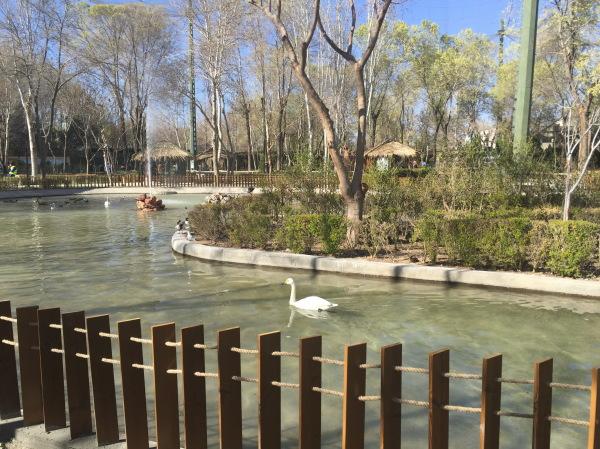 Garden birds. Esfahan . Iran.