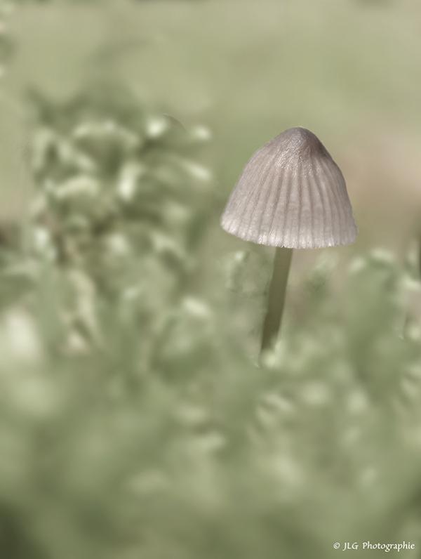 Sous l'ombrelle ...