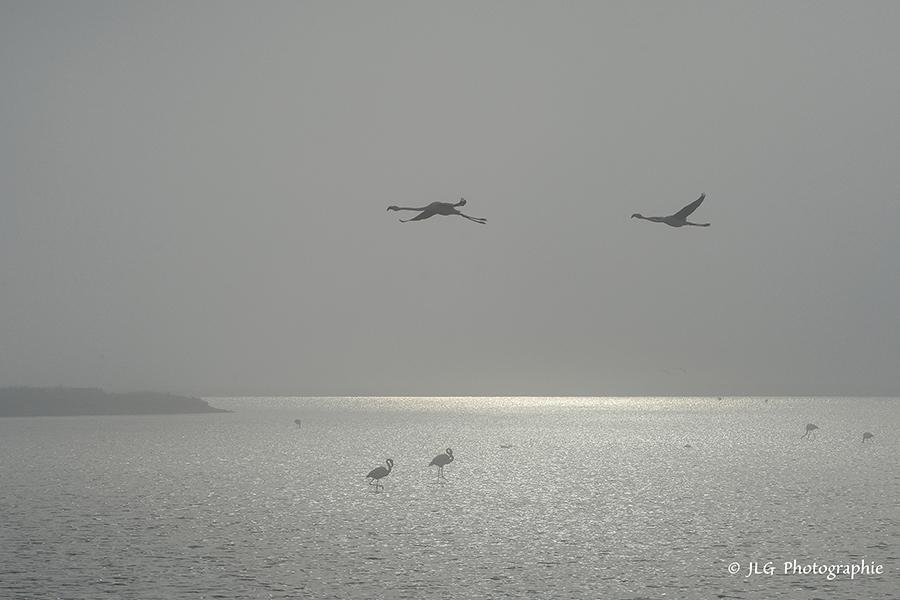 Un matin dans le brouillard ...