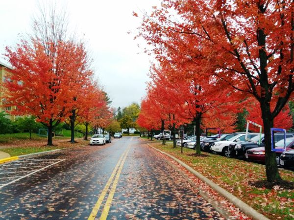 Fall Colors at Edgewood College