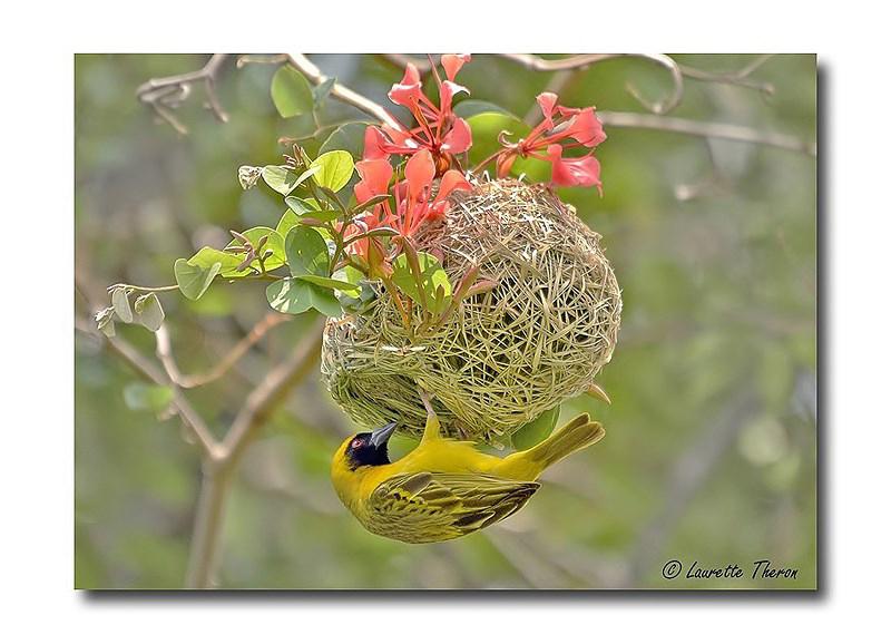 Master Nest Builder