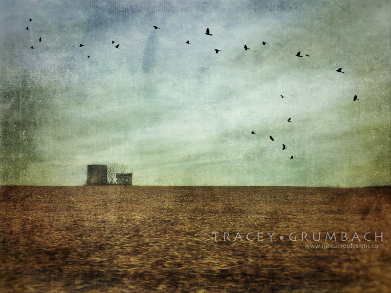 barren winter landscape with silo and birds