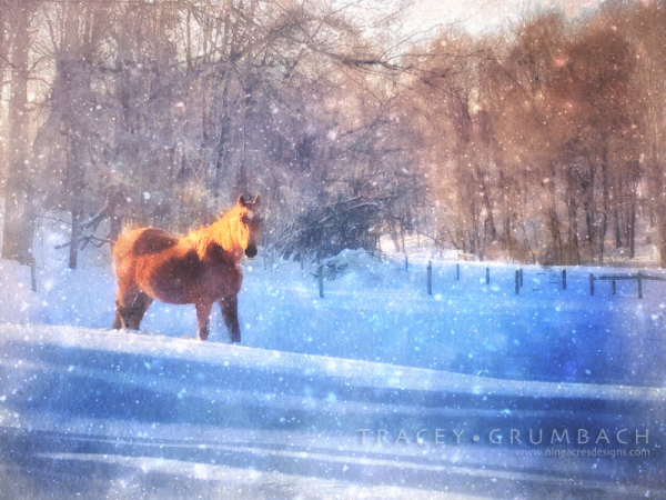 single horse in a snowy pasture