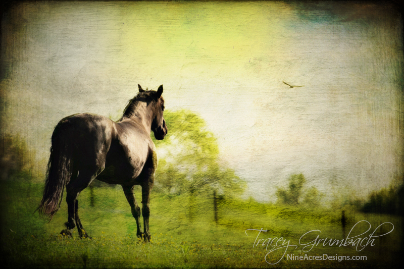 a horse in a field of buttercups