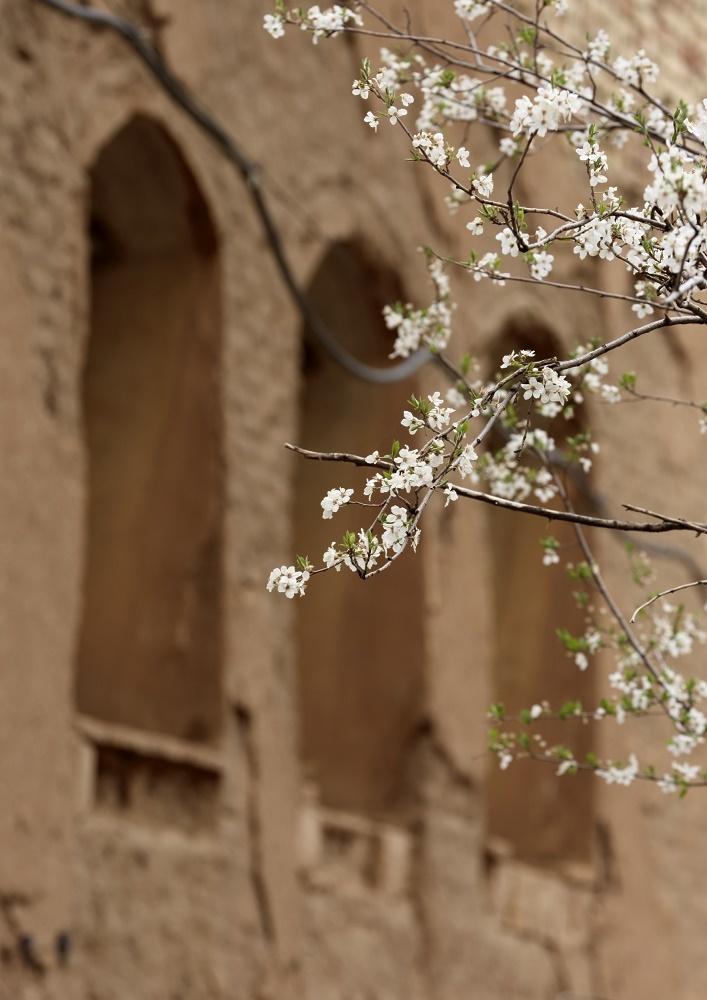 Beautiful Spring (3)
