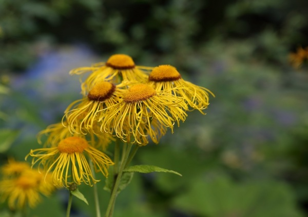 Beauty of Yellow!