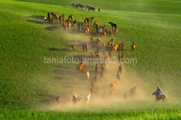 MONGOLIAN HORSEMEN IN THE STEPPS