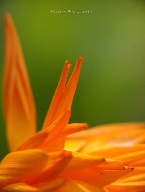 Je l'aurai aimé en orange !