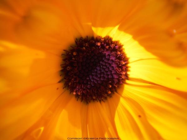 La Fleur et le soleil