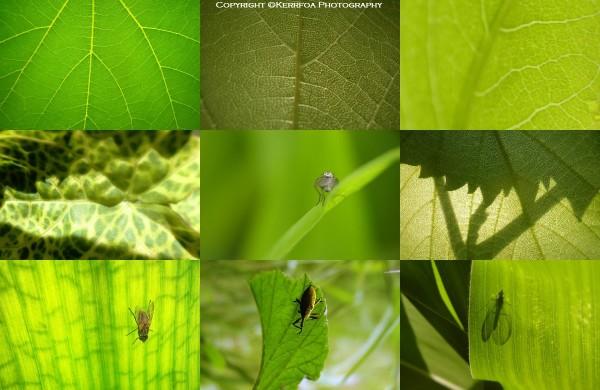Tout l'univers est vert ...